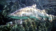 Shark over a coral reef Stock Footage