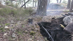 It smokes under the ground in moss and roots ( grass fire ) - stock footage
