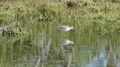 Texas bird reflected in water Stock Footage
