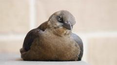 Texas bird sitting on railing Stock Footage