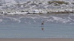 Texas birds on edge of surf Stock Footage