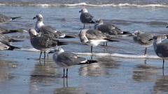 Texas sea gulls on the beach Stock Footage