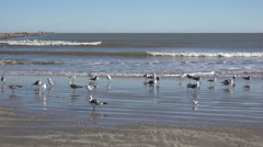 Texas sea gulls standing by waves Stock Footage
