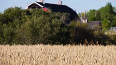 Wheat Fields and Old Barn Stock Footage