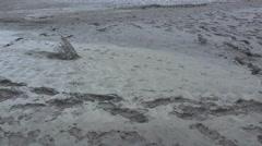 Texas bird footprints in mud zoom in Stock Footage