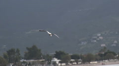 Seagull Lands into the Sea Stock Footage