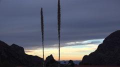 Texas Big Bend Chisos desert plants Stock Footage