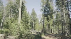 Forest path in dry pine forest - SLog3 Stock Footage