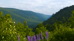 Cabot Trail Rolling Hills with Flowers Stock Footage