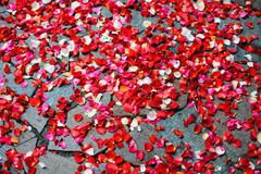 Rose petals scattered on the sidewalk Stock Photos