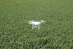 Flying white quadrocopters over a field of wheat - stock photo