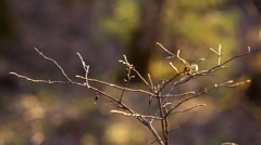 Bush branch on blurred background Stock Footage