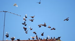 Group of dove Flying In Group On Blue Sky, Slow, Antenna Stock Footage