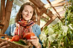 Friendly woman harvesting fresh tomatoes from the greenhouse garden putting ripe Stock Photos