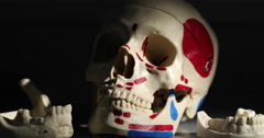Angled Skull and Jaw Bones as Dental Examples Move Right - stock footage