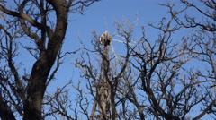 Texas Big Bend broken windmill through trees Sam Nail Ranch Stock Footage