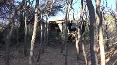 Texas Big Bend Sam Nail Ranch woods Stock Footage