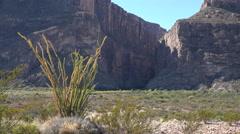 Texas Big Bend Santa Elena Canyon and sun on ocotillo Stock Footage