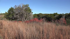 Texas Hill Country dry grass and red sumac leaves Stock Footage