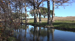 Texas Hill Country stream with trees on bank and dead leaves Stock Footage