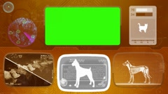 Boxer - Bullmastiff - dog - rottweiler - Animal Monitor - Bone scanning - Wor Stock Footage