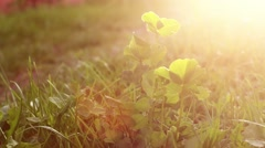Watering garden in sunset Stock Footage