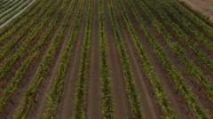 Aerial Wine Grapes Napa California 01 Stock Footage