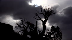 4K Young Girl Climbs Down Tree Beneath Dramatic Sky Stock Footage