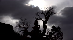 Children Climb Craggy Tree Branches Beneath Dramatic Sky Stock Footage