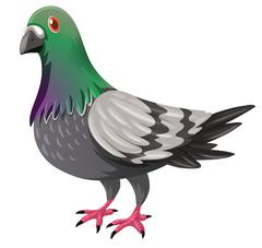 Pigeon with green and gray feather Stock Illustration