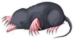 Mole with black fur - stock illustration