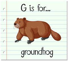 Flashcard letter G is for groundhog - stock illustration