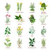 Medicinal Herbs Icons Flat - stock illustration