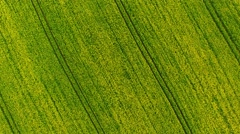 Camera flight over blooming coleseed field. Stock Footage