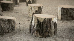 Group of cut trees to sit on Stock Footage