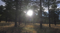 4K Sun Bursts Through Forest Trees Lights Landscape Time Lapse - stock footage
