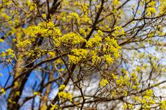 The first spring gentle leaves, buds and branches - stock photo