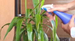 A man looking after his houseplant and watering it at home. Stock Footage