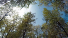 Panorama In The Wood On A Sunny Day Stock Footage