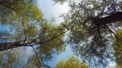 Tops Of The Trees In The Forest Stock Footage