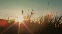 The sun is shining through the grass in  mountain. Timelapse. Indigo color - stock footage
