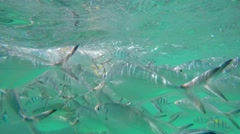 Underwater World with Fishes and Clear Turquoise Water. 4K. Stock Footage