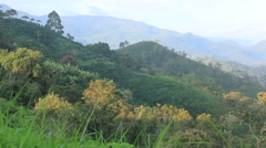Green hills in Colombia Stock Footage