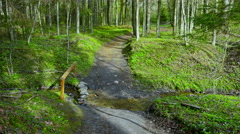 Spring forest and creek, tilt Stock Footage