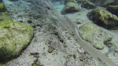 A school of silvery fish share the manatees' habitat Stock Footage