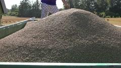 Farmer man shovel grain Stock Footage