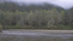 Long shot of grizzlies beside a river at the edge of a forest Stock Footage