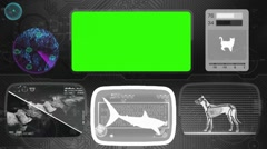 Tiger shark - Bone scanning  - Animal Monitor  - World search - grey Stock Footage