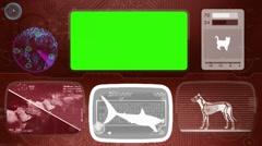 Tiger shark - Bone scanning  - Animal Monitor  - World search - red Stock Footage