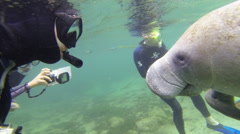 Diver and manatee meet eye to eye Stock Footage